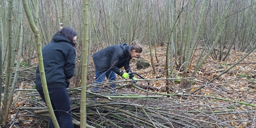 Coppicing Work Days at Greno Woods Nature Reserve