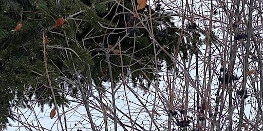The Art  of Winter Tree Identification