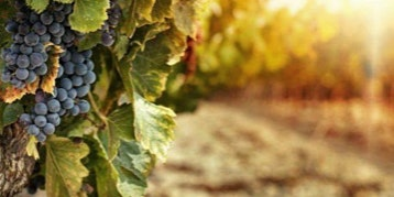 Study of Terroir Wine Class with James Phillips, Winemaker