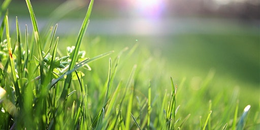 Sustainable Lawns and Alternatives