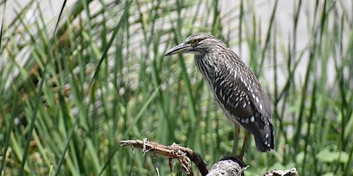 Community Science - Bird Surveying