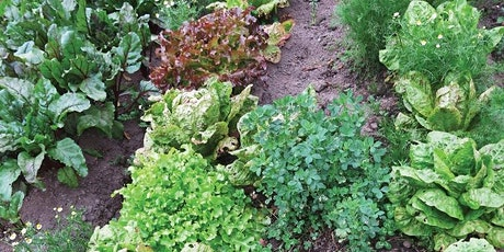 Sustainable Food Garden Tour at Moss House tickets