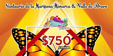 Santuario de la Mariposa Monarca y Valle de Bravo entradas