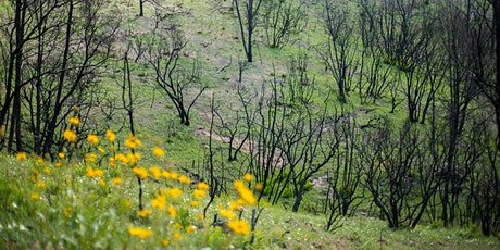 An Ecological and Floristic Perspective of Recent Sonoma County Wildfires with Peter Warner 3-11-20 tickets