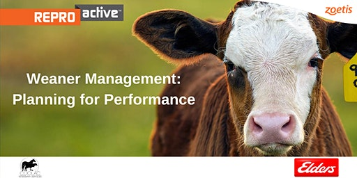 ReproActive Gidleigh Station: Weaner Management - Planning For Performance