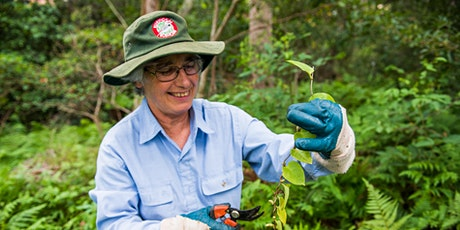 Introduction to Bushcare tickets