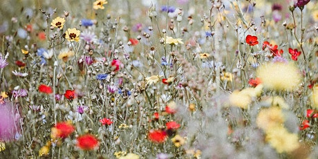 Gardening | Walking with Wildflowers tickets