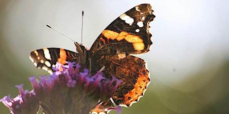 Butterfly Safari tickets