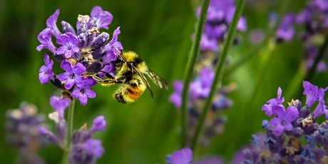 Wild Bees | Build a Hive tickets