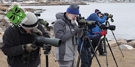Seabirds and Pelagic Birding Boat Trip in Cape Ann (2020) tickets