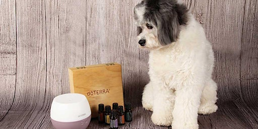 Intro to doTERRA essential oil - Featuring pets, Your Dog's Gym -Eau Claire