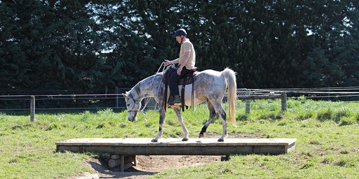 February Horse Adventure Park session - Afternoon