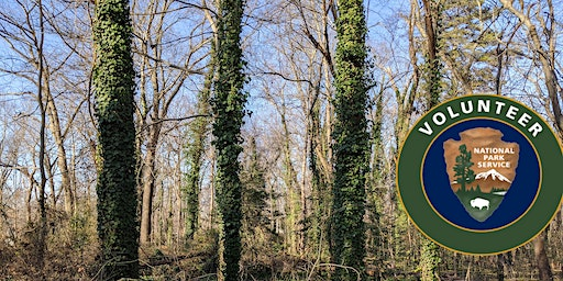 MLK Day of Service: Invasive Species Removal