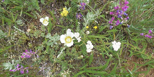 Wildflower and Weeds Walk @ Caribou Ranch