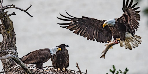Bald Eagle Viewing, Lunch & Beverages, OR