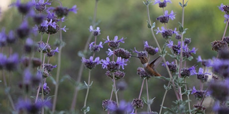 Building Resilience with Native Plants: Gardening for Wildlife with Erin Johnson tickets