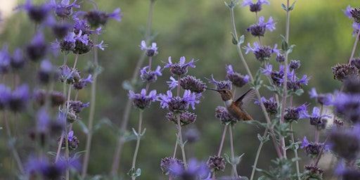 Building Resilience with Native Plants: Gardening for Wildlife with Erin Johnson
