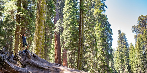 Fireside Chat with Sequoia National Park Superintendent Smeck