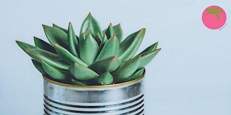 Cactus y Suculentas: mantenimiento y propagación básica tickets