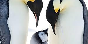 Nature Film: March of the Penguins