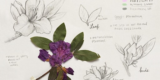 Botanical Drawing with Julia Moore