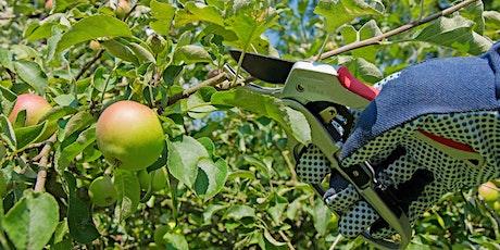 Fruit tree pruning tickets