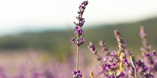 Lavender Plant Initiation Retreat with Pam Montgomery