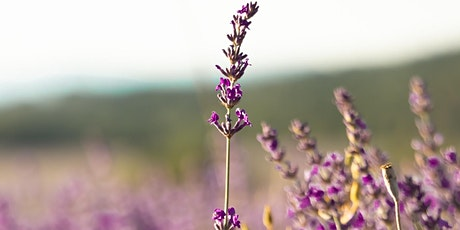 Lavender Plant Initiation Retreat with Pam Montgomery- France billets