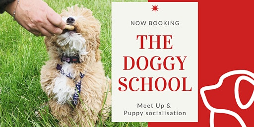 Puppy socialisation and obedience