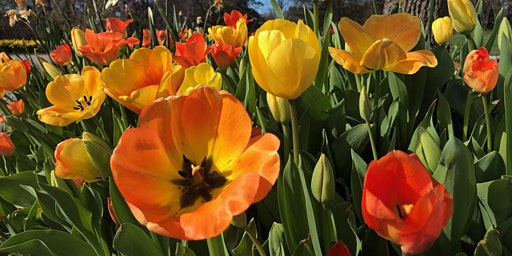 Spring Bulb Walk and Master Class