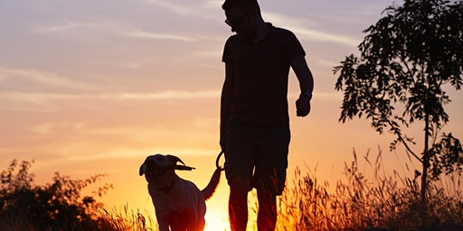 Dog walking in Dallas can help with minor family depression