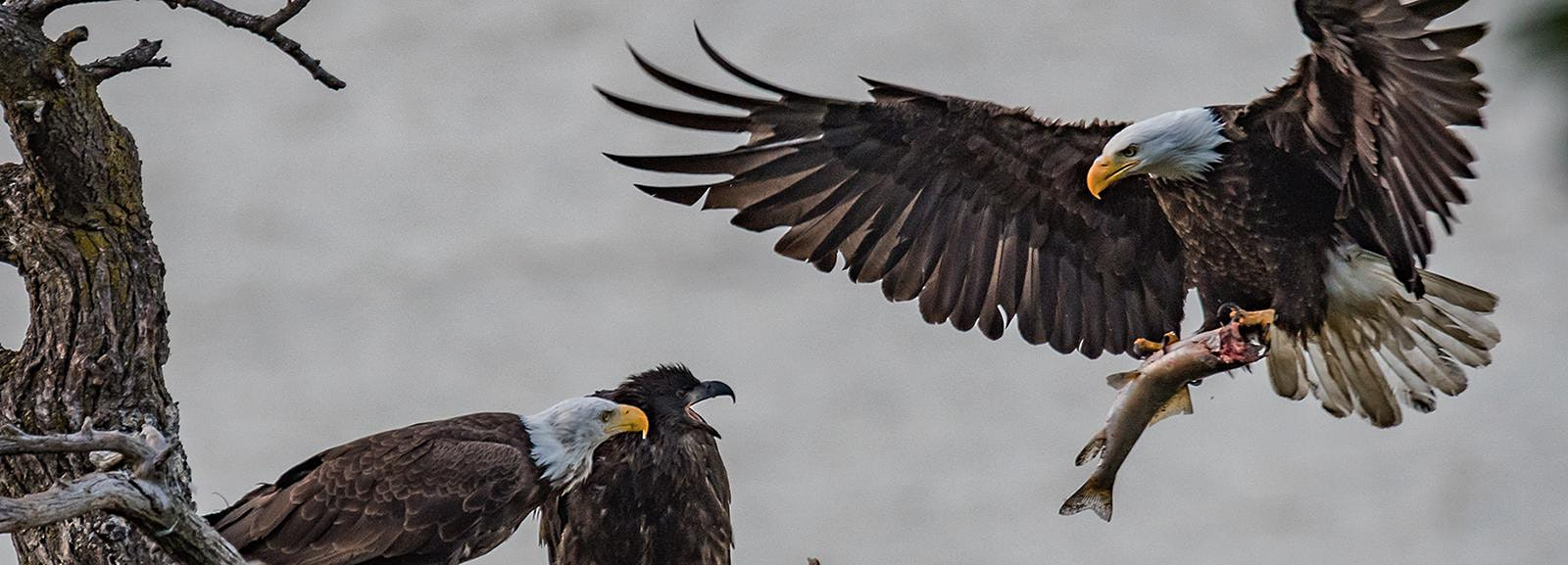 Bald Eagle Viewing & Wine Tasting