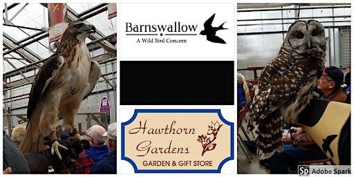 Barnswallow: A Wildbird Concern Raptor Presentation