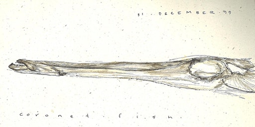 Scientific Field Sketching