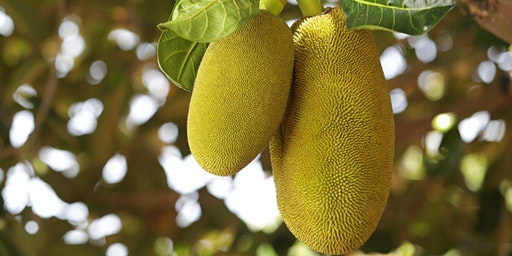 Sweet and Savory Jackfruit Workshop