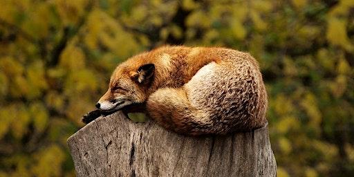 Achieving Sound Sleep