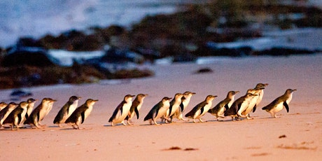 Phillip Island & Penguin Parade + Koala Reserve Day Tour $69 tickets