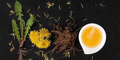 DANDELIONS -THE PRIZED WILD EDIBLE