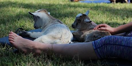 Goat Yoga Texas - Sat, Feb 1 @ 10AM tickets