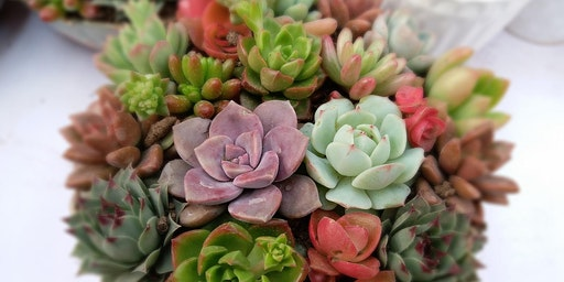 Build Your Own Succulent Container Garden Class