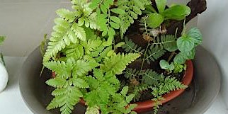 Build Your Own Mini Fern Container Garden