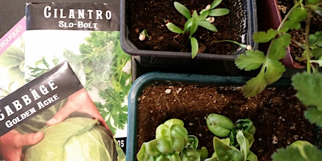 Gardening Series One - 3 class series in one day tickets