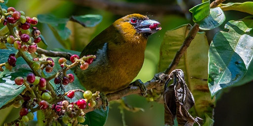 Travel and birding in Costa Rica