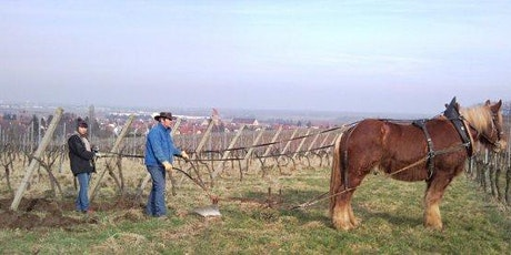 ALSACE: Wine & Culture with Violette Wine Imports tickets