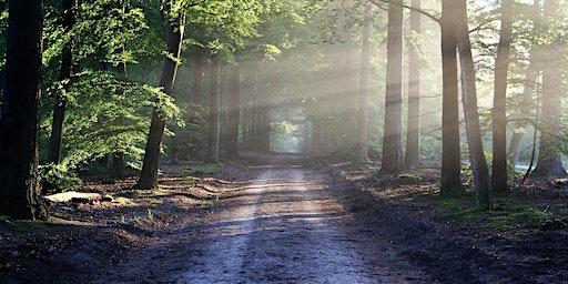 Free Mindfulness Meditation