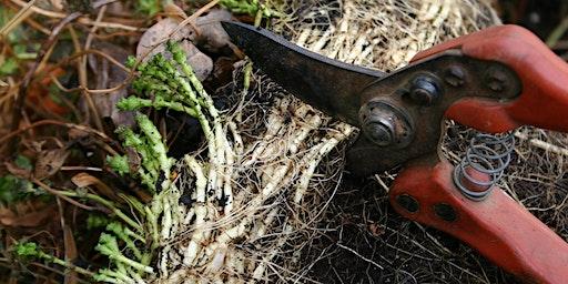 Eat, Sleep, Garden: Tool Sharpening Workshop