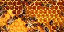 Introduction to Beekeeping Workshop SD-what you need to know to keep bees