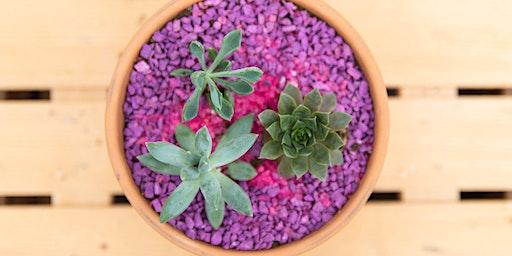 Kid's Winter Escape: Succulent Gardens!