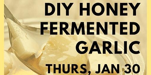 Honey Fermented Garlic DIY & Info