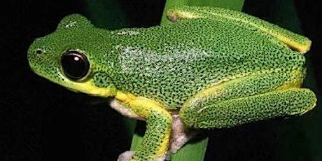 Night adventures: Karawatha - Frog Spotting tickets